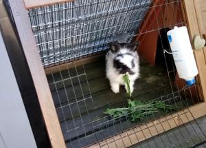 Siste bilde av kaninen Daisy